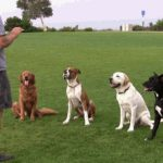 Dog Training – A Vital Component of Your Dog's Life