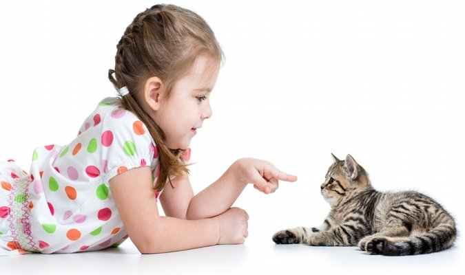 Different Kinds of Pet Animals For Your Kids