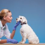 Pet Care Insurance – Tips and Advice