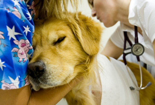 Pet Emergency Care in Veterinary Hospitals