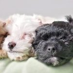 Desire A New Member Of The Family? Adopt A Pet Shelter Animal