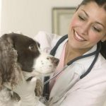 How You Can Keep Healthy Pets