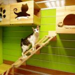 Cat Houses – How you can Reclaim Your Own House together