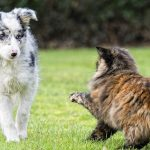 Dog Care and the Happy Healthy Dog