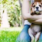 Adopt a Pet – Animals Make Us More Human