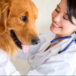It's Safe To Use In Home Veterinary Care For Your Pets