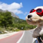 Tips for Holiday Travel With Your Pet