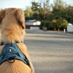 Finding the Best Dog Harness for your Pooch