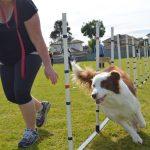 Safety Benefits of Proper Dog Training