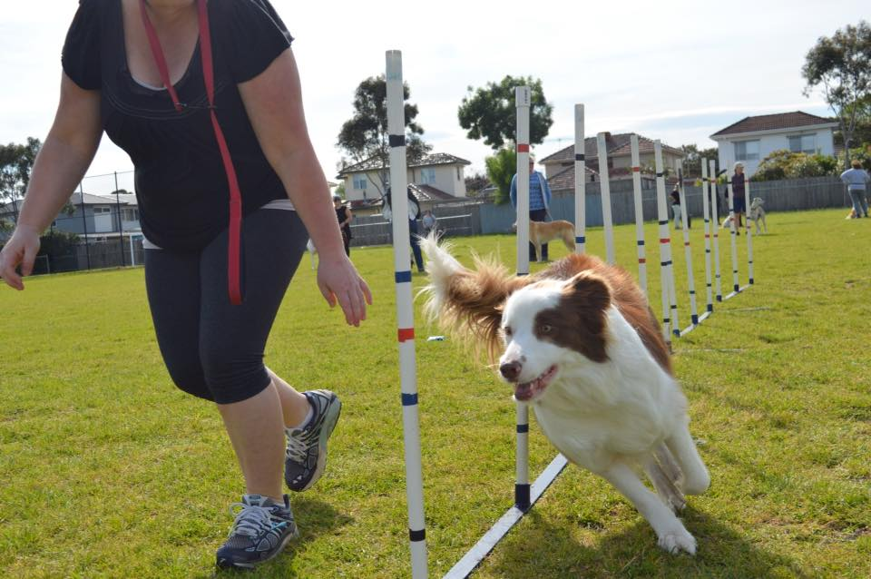Safety Benefits of Proper Dog Training