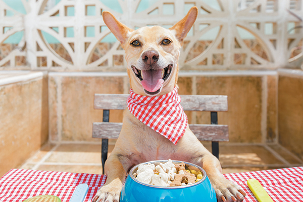 Why Is Good Quality Dog Food A Necessity?
