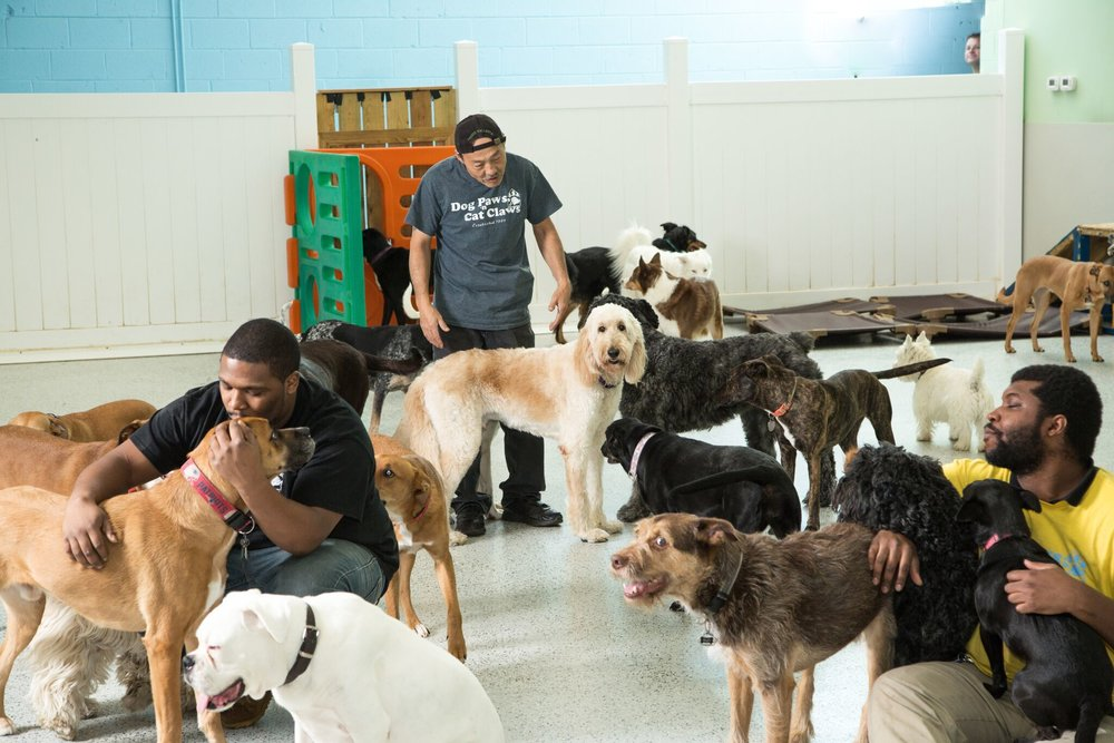 All About Pet Daycare Services For Your Feline Friend!