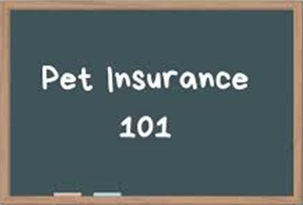 What Is Pet Insurance and How Does It Work?