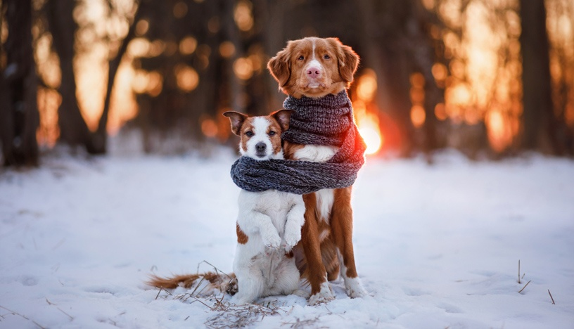 Things You Need To Keep Your Pet Safe In Winters!