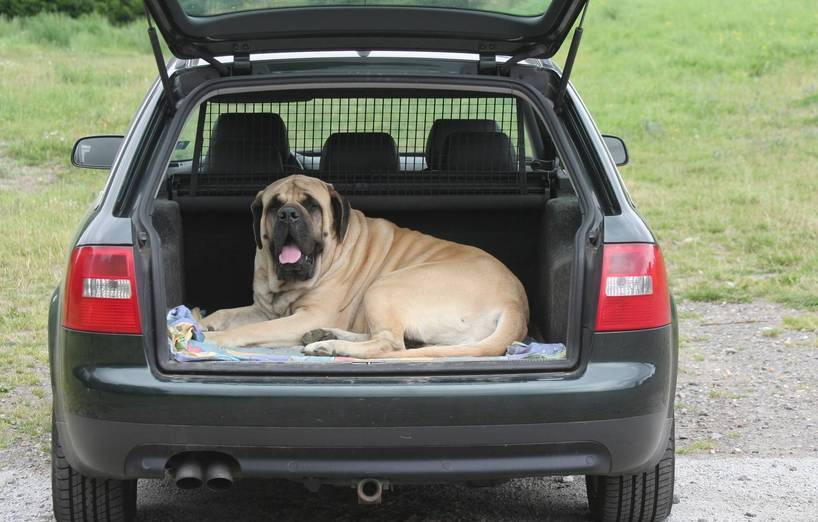 Get the Best Pet Transport Services to Suit your Specific Needs