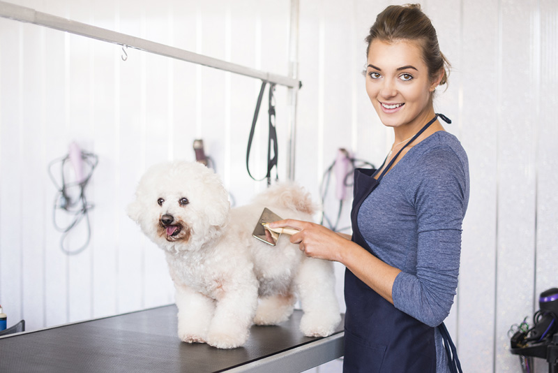 Dog Grooming Tips – Daily Dog Care Series