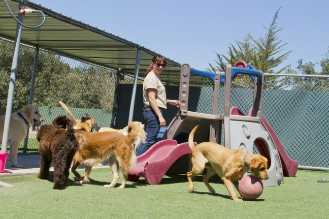 Factors To Consider Before Starting A Dog Boarding Facility