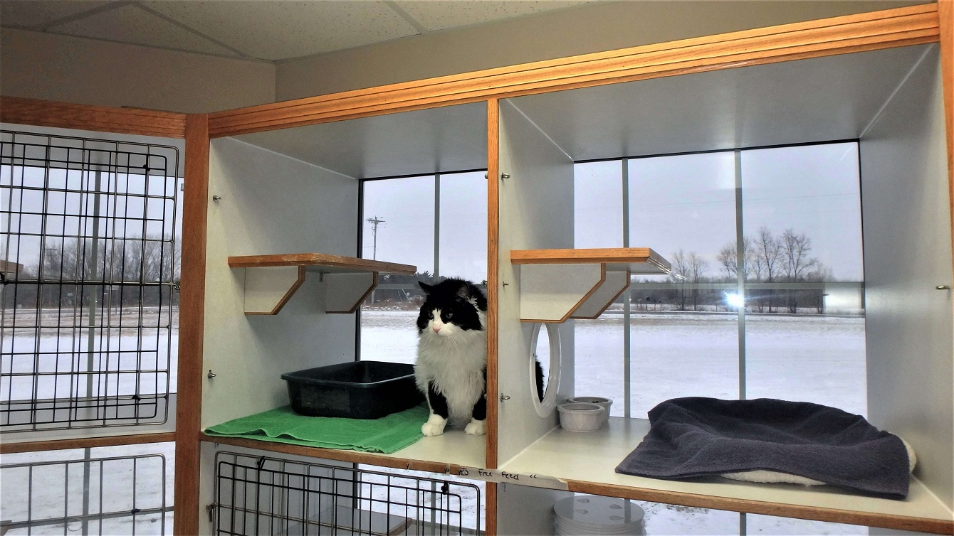 Learn More About Feline Boarding Services In South Jersey Shore