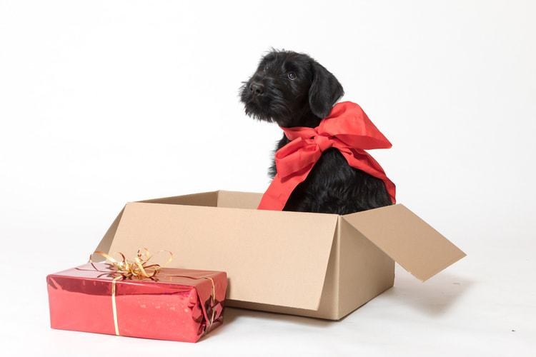 Christmas Gifts for your Peppy Dog