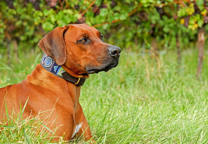 Everything you need to know about dog collars
